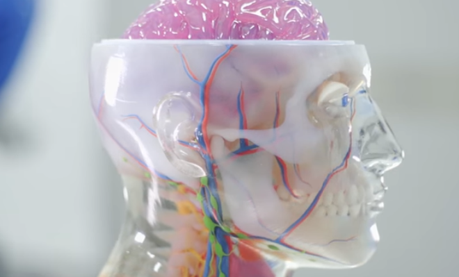 Big Strides in Neurosurgery with 3D Printed Training Simulators