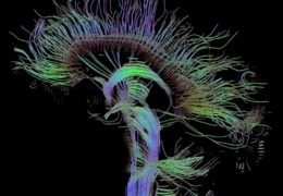 Recent Advances in Neuroimaging Techniques
