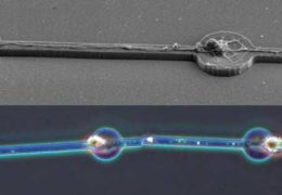 Building a brain, cell by cell: Researchers make a mini neuron network