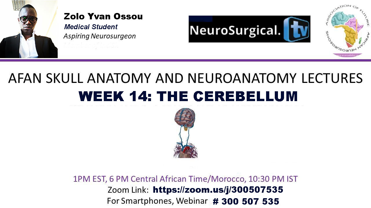 "Young Africa Neurosurgeons present were LIVE webcast on ""The Cerebellum""; now recorded here"