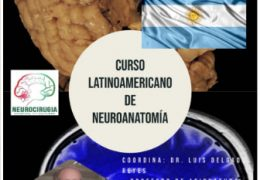 "Neuroanatomia:  ""Anatomy of corpus striatum"" with Dr Luis Delgado."