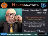 "Monday, 7:30 pm IST,  9 am EST, Rhoton Anatomy Series, with Victor Hugo Perez Perez MD, presenting, ""Cerebellar Arteries and Posterior Fossa Veins"""